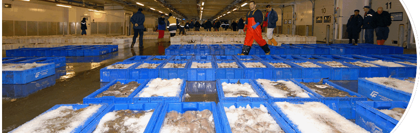 Peterhead Fish Market - Activity
